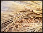 Getreide mit Wind reinigen Maschinenbau Brama GmbH