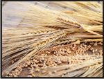 Cereal chaff dry Maschinenbau GmbH Brama