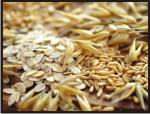Seeds seeds dry Maschinenbau GmbH Brama